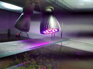 iluminacion especial acuario plantado