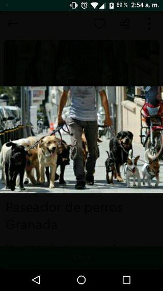 pasear perros y cuidarlos