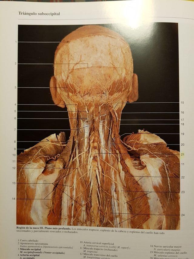 Atlas anatomia humana de segunda mano por 60 € en Barcelona en WALLAPOP