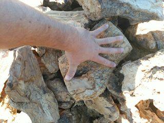 Leña seca olivo