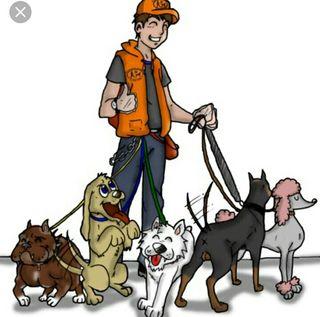 Paseador y alojamiento de perros y animales