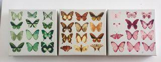 Cuadros mariposas