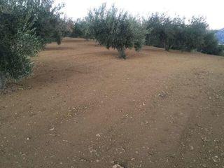 Plancha para olivar muy reforzada