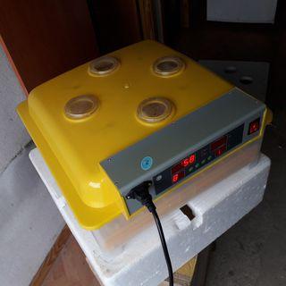 incubadora de volteo automatico