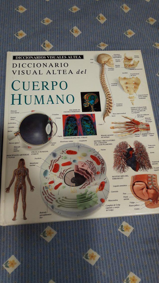 5744f840a6 DICCIONARIO VISUAL ALTEA-EL CUERPO HUMANO de segunda mano por 7 € en ...