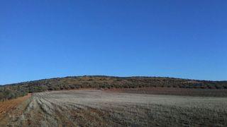 Finca rústica 19 hectareas monte bajo