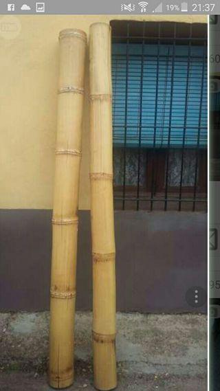 caña bambú