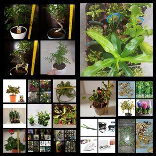 Hoy y mañana bonsais,carnívoras, plantas, semillas