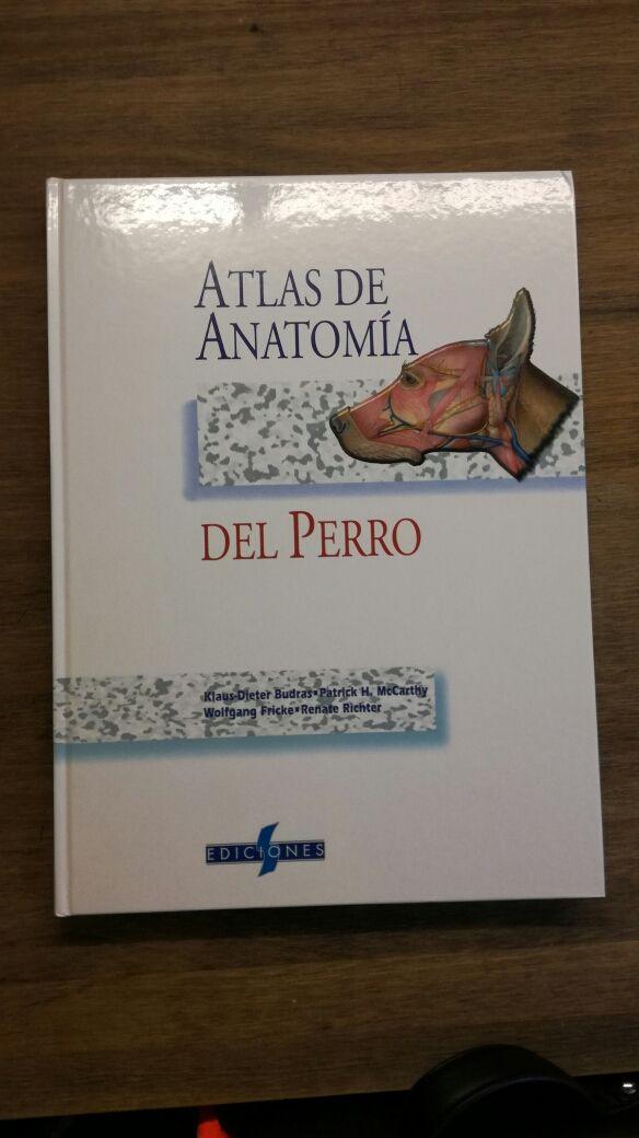Magnífico Anatomía Genital Canina Inspiración - Imágenes de Anatomía ...