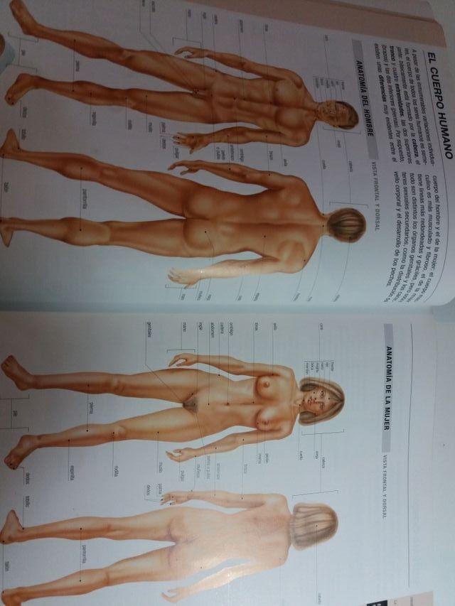 Atlas basico de anatomia PARRAMON de segunda mano por 10 € en ...