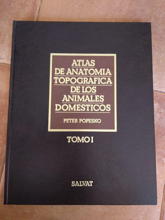 Atlas anatomia veterinaria Popesko de segunda mano por 95 € en Sant ...