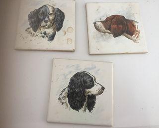 Azulejos perros
