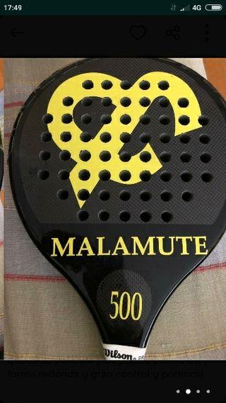Martina Colette Malamute