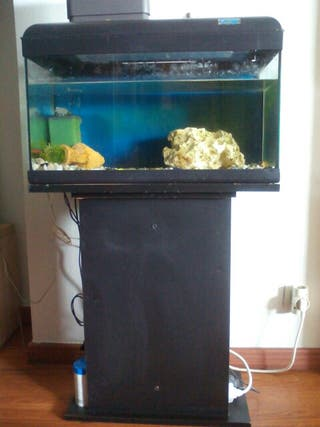 Pecera acuario
