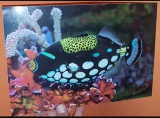 3 cuadros de carton pluma de peces marinos
