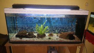 aquario pecera