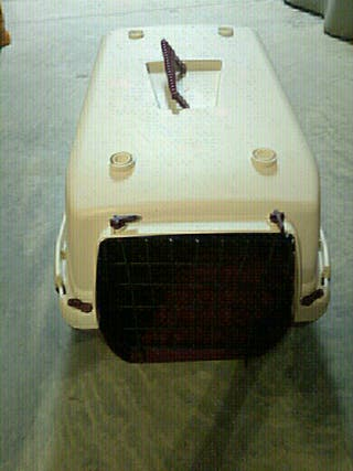 transporting para perros
