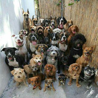 cuidado o paseo de perros