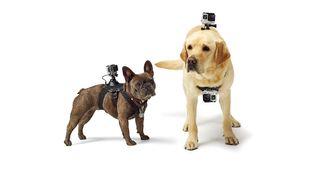 arnes de camara gopro para perros
