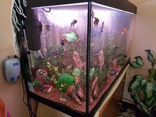 acuario 200litros