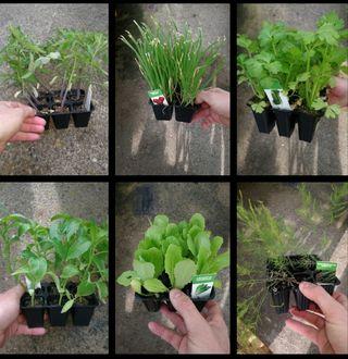 plantas de huerto