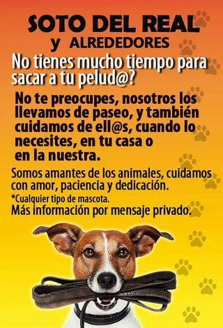 Cuidado y paseo de animales