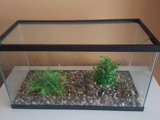 acuario / pecera / terrario