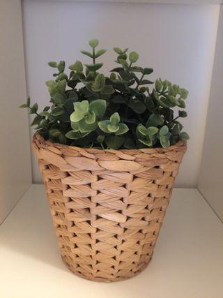 Planta y Maceta IKEA