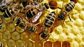 Retiro enjambres abejas