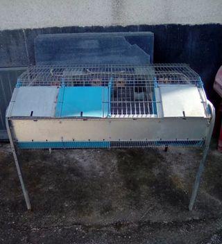 jaula cría para conejos
