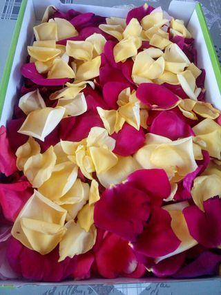 Pétalos Rosas Naturales