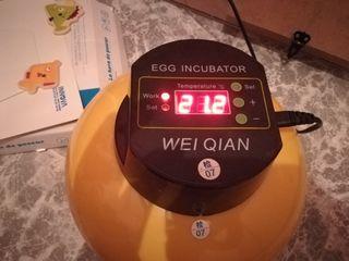 incubadora automatica