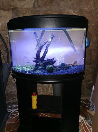 acuario 125 litros panoramico