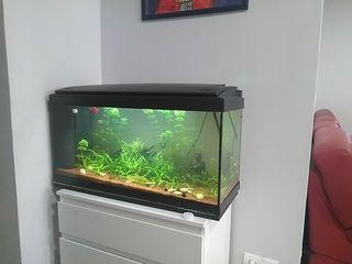 acuario 80 litros