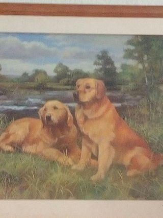 cuadro perros