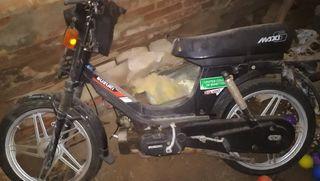 Suzuki maxi