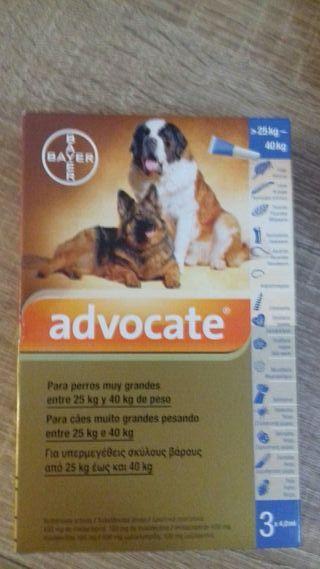Pipeta perro Advocate