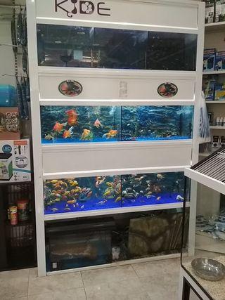 Bateria acuarios