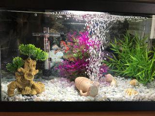 Bonsai decoración acuario