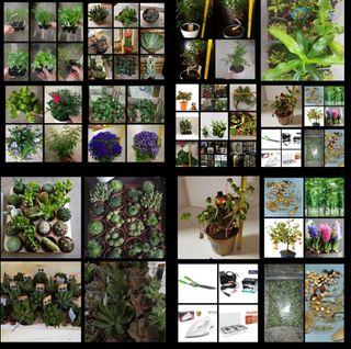 Plantas. Y accesorios