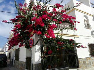 casa en Torrenueva