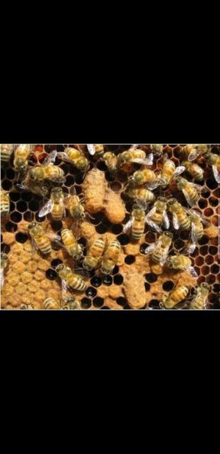enjambre abejas