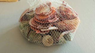 conchas y caracolas