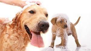 cuidado y lavado de mascotas