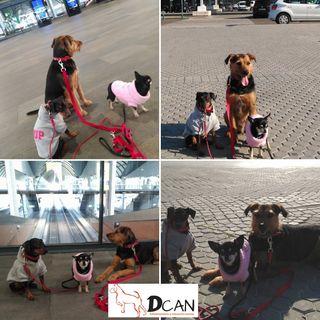 Paseador y adiestrador canino