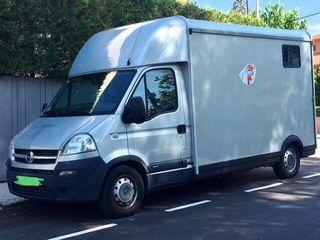 Camión caballos Opel Movano 2008. Sólo 32.500 km.