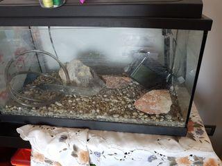 acuario 50litros