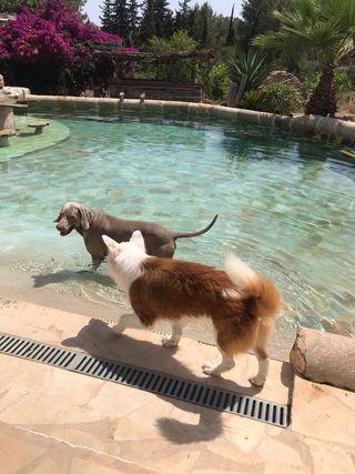 Busco trabajo de cuidado de perros