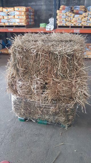 pacas triticale con grano