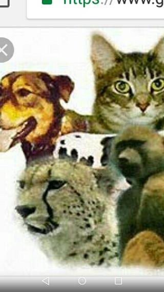 PASEO O CUIDO A TUS ANIMALES
